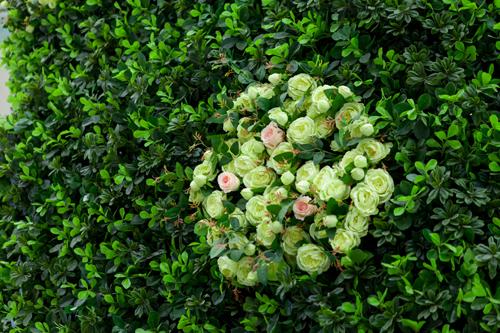 环艺室外psd植物素材